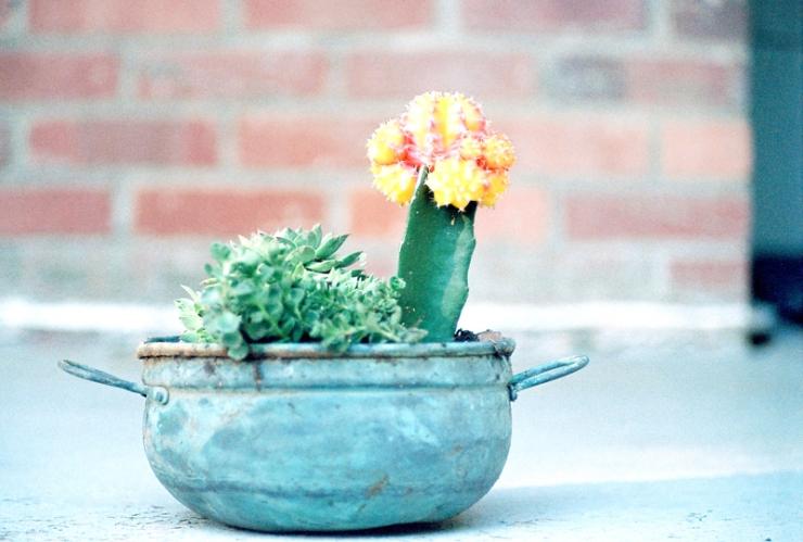 R1-08183-0004_succulent2_sized